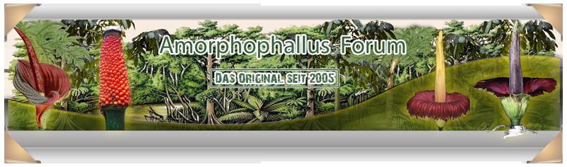 Amorphophallus Forum